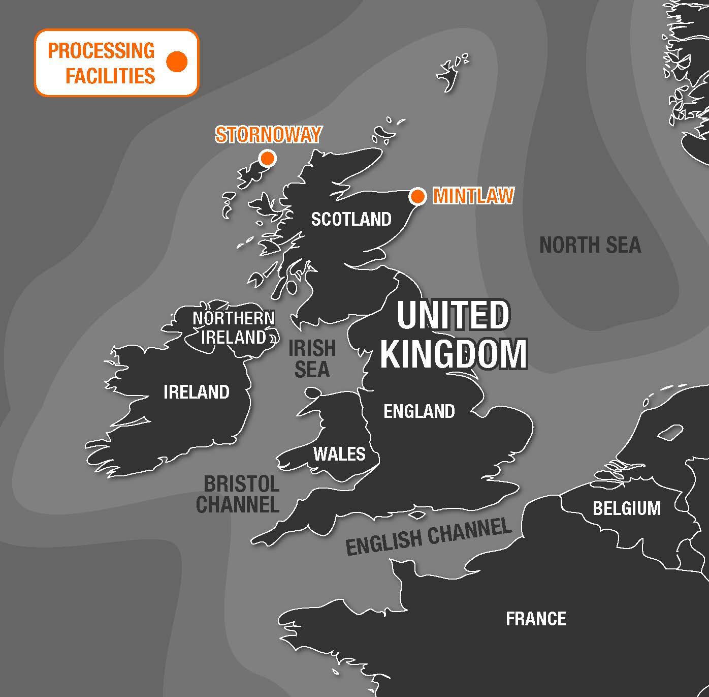 Macduff Fresh Caught Whelk From Scotland