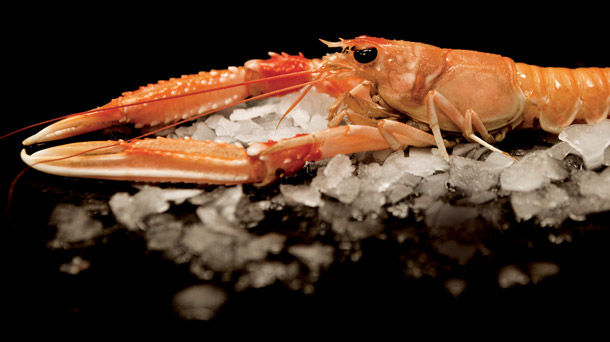 how to cook fresh langoustines