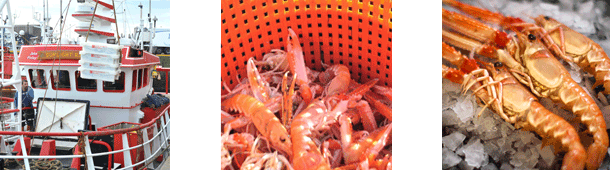 Langoustine Fishing